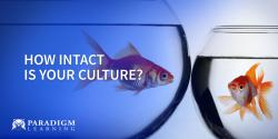 How Intact is Your Culture?